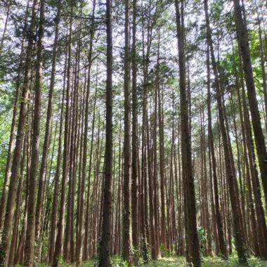 forêt près du lac Sayama