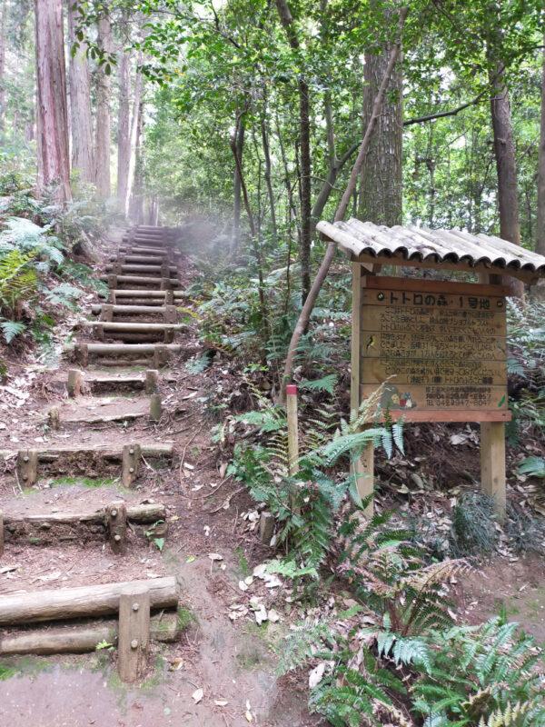 Forêt de Totoro