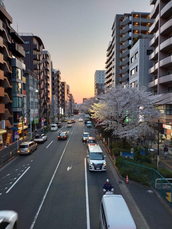 Sakura au coucher du soleil à Nakamurabashi