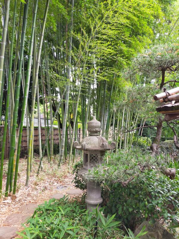 bambous du jardin botanique d'Akatsuka, Itabashi