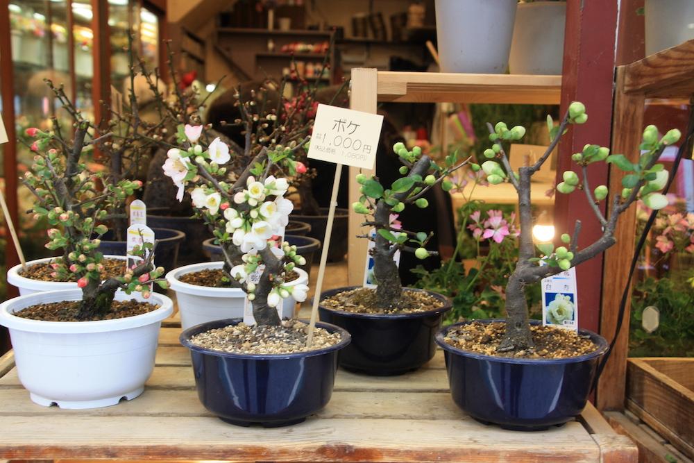 jardinerie à Tokyo, vivre a Tokyo