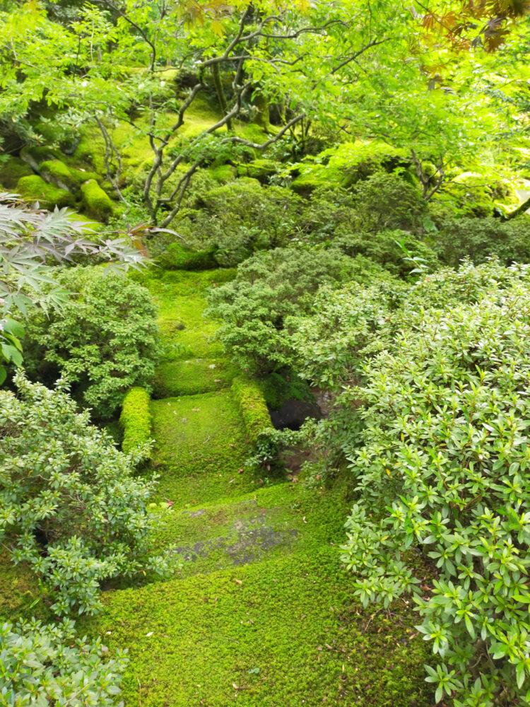 mousses dans le jardin du Rin-no-ji de Nikko