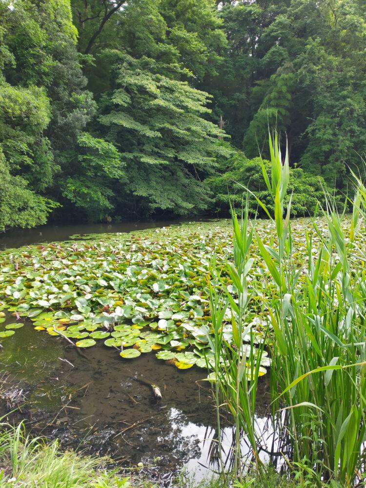 plan d'eau Shakuji Koen, vivre à tokyo